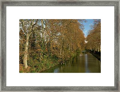 Canal Du Midi And Plane Trees Framed Print by Bob Gibbons