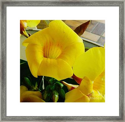 Canario Flower Framed Print by The Art of Alice Terrill