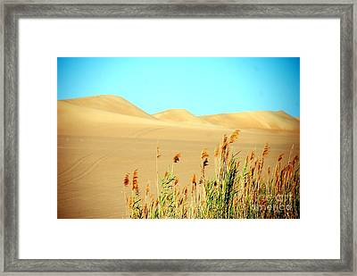 Canaveral Framed Print