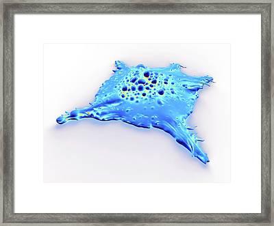 Cancer Cell Framed Print