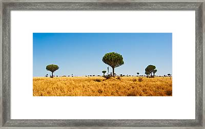 Candelabra Trees Framed Print by Adam Romanowicz
