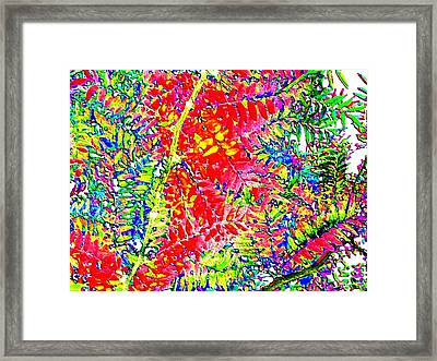Candid Color 22 Framed Print by Will Borden