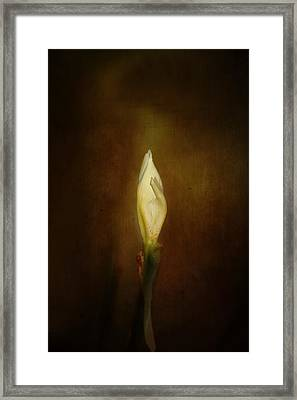 Candle In The Wind Framed Print by Anne Rodkin