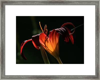 Candle In The Wind Framed Print by Donna Kennedy