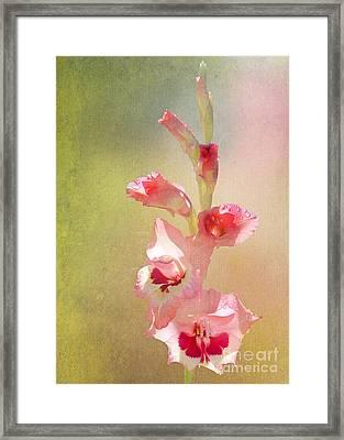 Candy Cane Gladiolas Framed Print