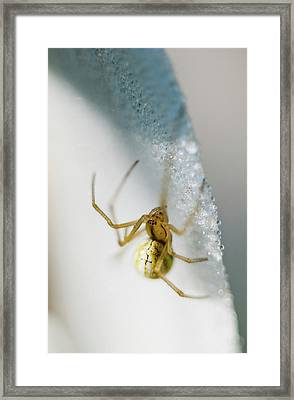 Candy Cane Spider On A Flower  Astoria Framed Print by Robert L. Potts