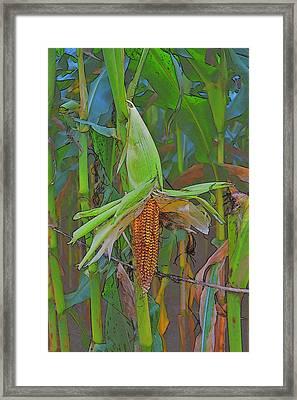 Candy Corn Framed Print by Thomas  MacPherson Jr