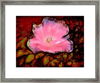 Candy Pink Rose Framed Print by Lilia D