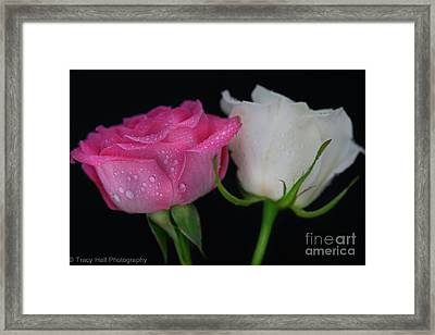 Candy Roses Framed Print by Tracy  Hall
