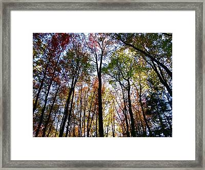 Candy Trees Framed Print