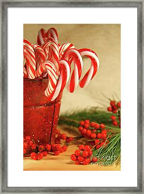 Candycanes With Berries And Pine Framed Print by Sandra Cunningham