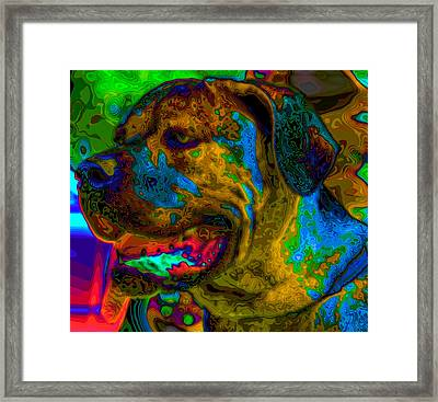 Cane Corso Pop Art Framed Print by Eti Reid