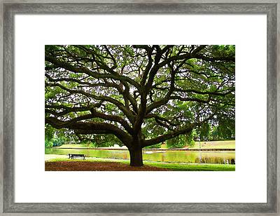 Cane River Oak Framed Print