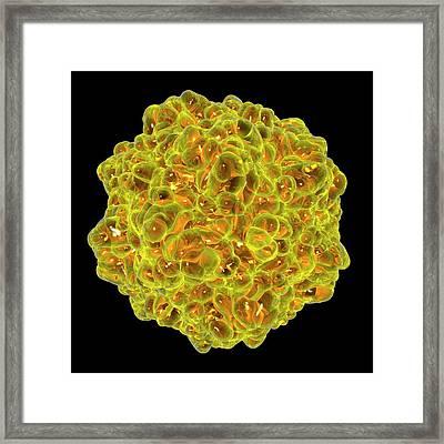 Canine Panleukopenia Virus Framed Print