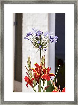 Canna And Agapanthus Framed Print