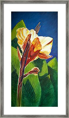Canna Lilly Sunrise Framed Print by Kent Looft