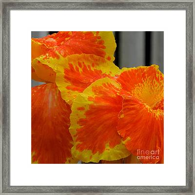 Canna Can-can Framed Print by Renee Trenholm
