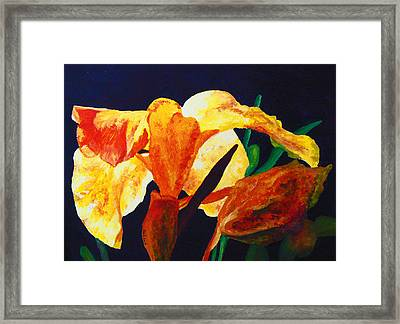 Canna Glow Framed Print by Margaret Saheed