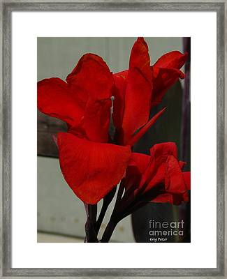 Canna Framed Print by Greg Patzer