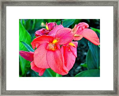 Canna In Red Framed Print by Larry Bishop