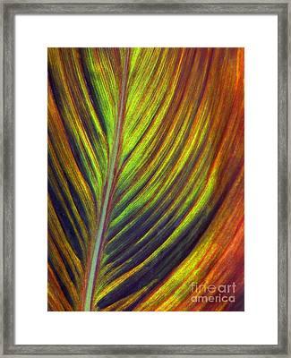 Canna Leaf Framed Print by Living Color Photography Lorraine Lynch