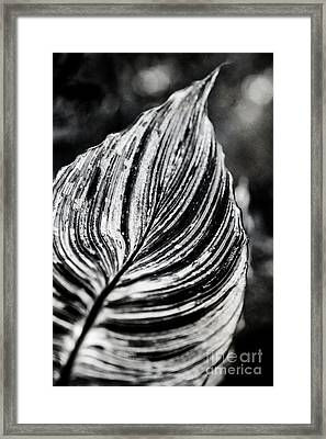Canna Leaf Framed Print by Venetta Archer