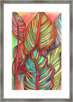 Canna Leaves Framed Print by Sacha Grossel