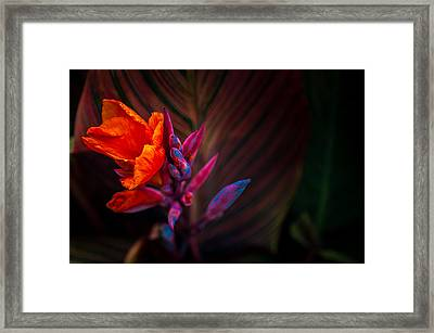 Canna Lilly At Freimann Square Framed Print by Gene Sherrill