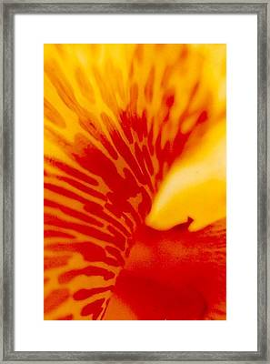 Framed Print featuring the photograph Canna Lilly by Michael Hoard