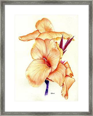 Canna Lilly Framed Print by Pamela Cawood
