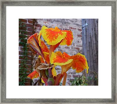 Canna Lily And Background Framed Print by Warren Thompson