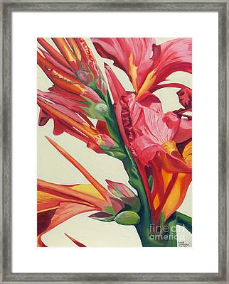 Canna Lily Framed Print by Annette M Stevenson
