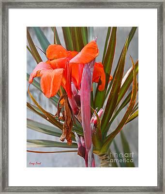 Orange Canna Lily - Birth  Maturity And Death Framed Print by Kenny Bosak