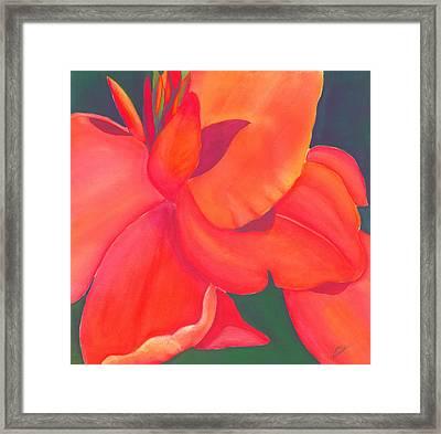 Canna Lily Framed Print by Debbra Nodwell-Bender