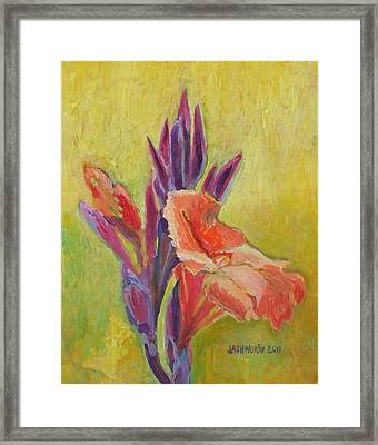 Canna Lily Framed Print by Janet Ashworth