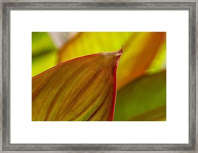 Canna Lily Leaf Framed Print by Marina Kojukhova