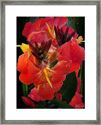Canna Lily Framed Print by Michele Avanti