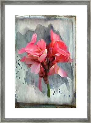 Canna Lily Framed Print by Paulette B Wright