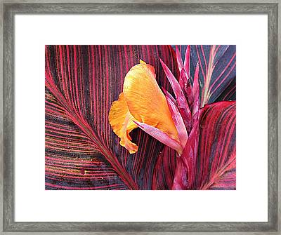 Canna Lily Stripes Framed Print by MTBobbins Photography