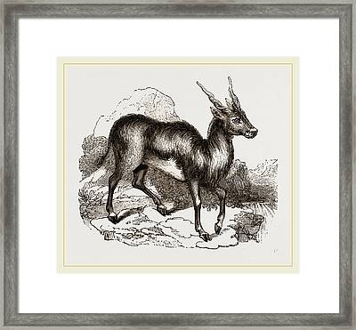 Canna Framed Print by Litz Collection