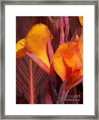 Canna Painterly Framed Print