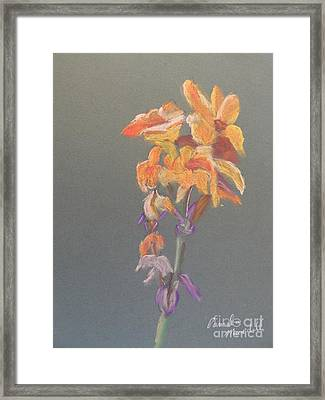 Canna Framed Print by Pamela  Meredith