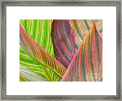 Canna Tropicana Color Framed Print