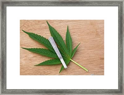 Cannabis Cigarette And Leaf Framed Print by Adam Hart-davis