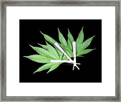 Cannabis Cigarettes And Leaves Framed Print by Adam Hart-davis