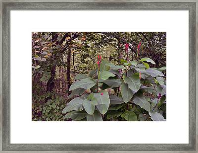 Cannas In Red Framed Print by Larry Bishop
