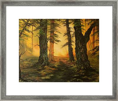 Cannock Chase Forest In Sunlight Framed Print