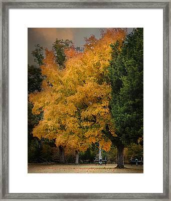 Cannon Under The Golden Tree - Autumn Scene Framed Print by Jai Johnson