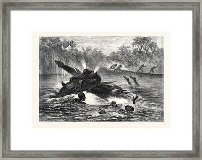Canoe Destroyed By A Hippopotamus On The River Zambesi Framed Print