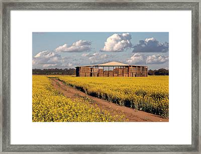 Canola And Hay Framed Print by Helen Akerstrom Photography